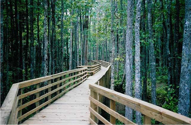 Rossville_Boardwalk_Wolf_River1