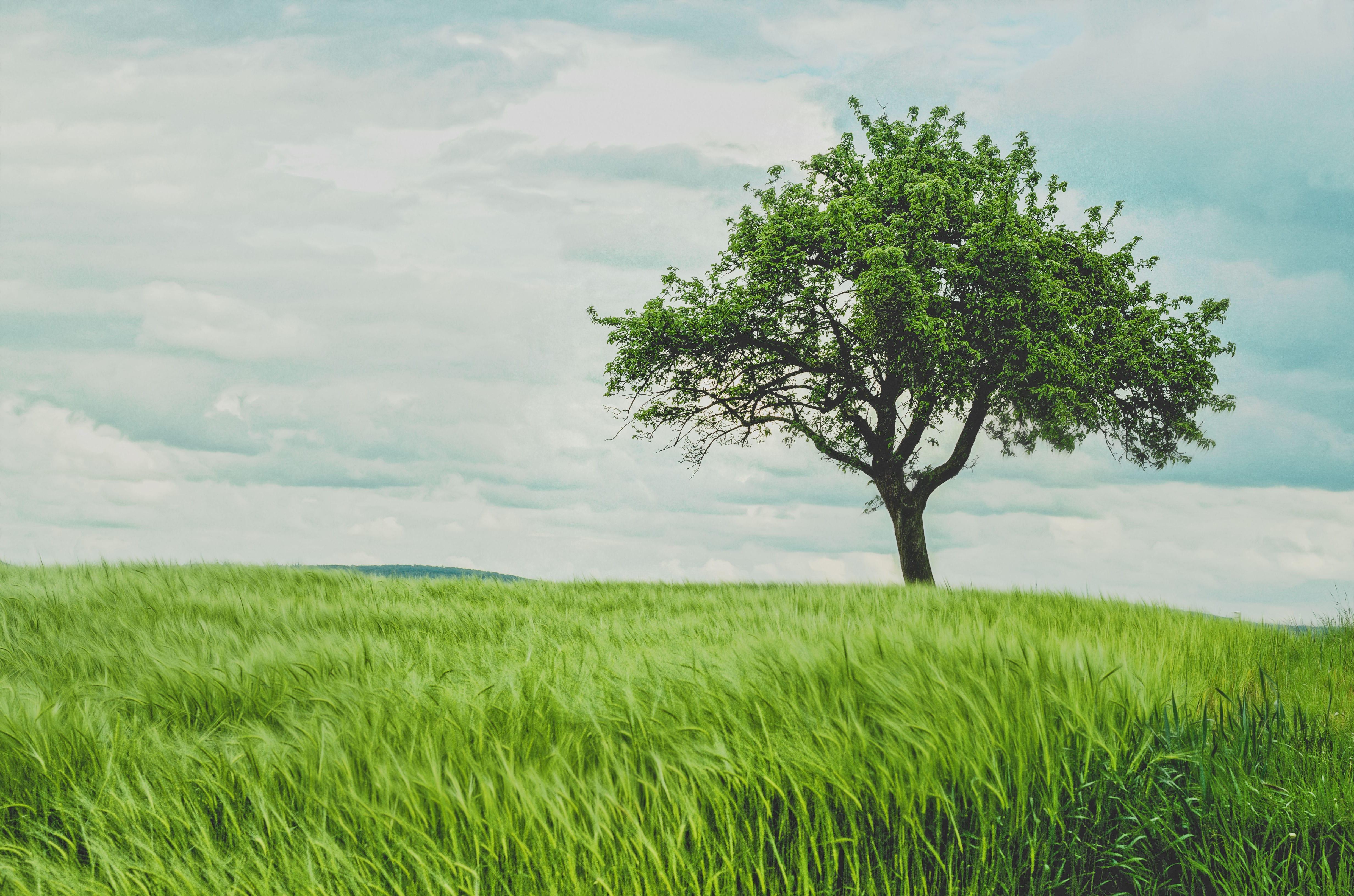bovf94dprxwu0u3qspjf_tree