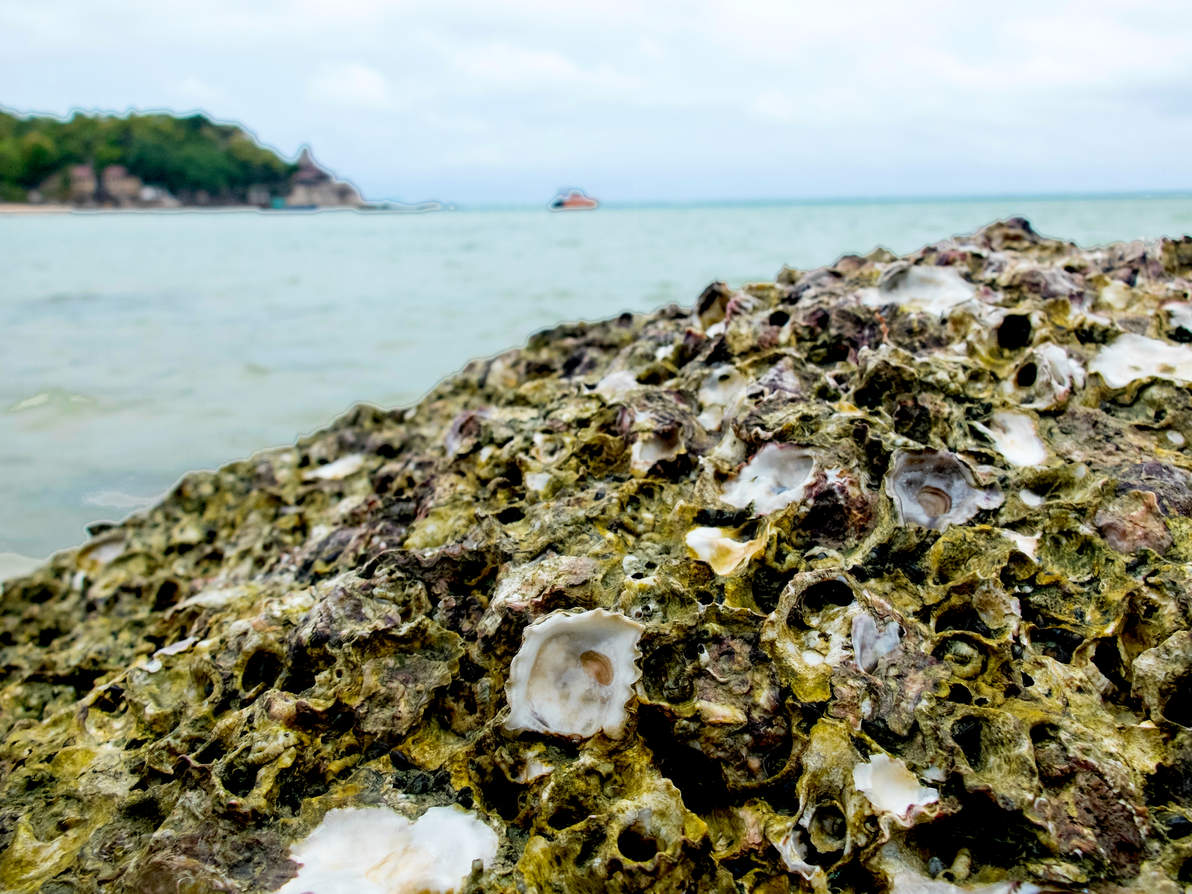 oyster_reef