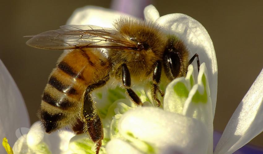 bee_2_c_daswebweib_cc_by_2_point_0
